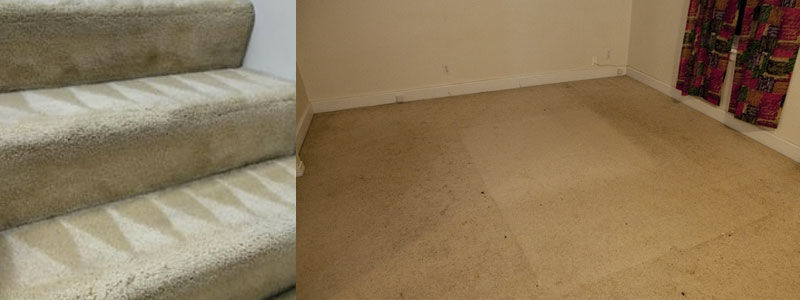 Best Carpet Cleaning Sandy Ridges