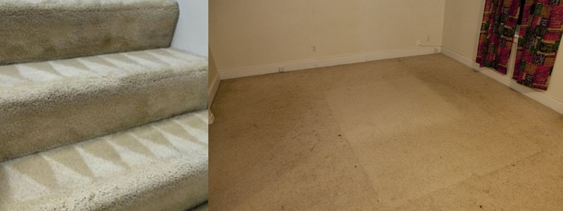 Expert Carpet Cleaning Burnside