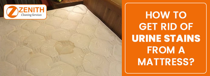 Urine Mattress Stain Removal