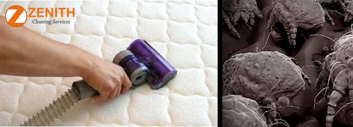 Mattress Dust Mites Removal Blantyre
