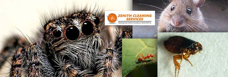 Best Pest Control Adelaide