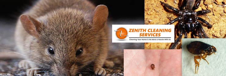 Best Pest Control Canberra