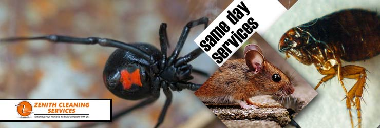 Same Day Pest Control Melbourne